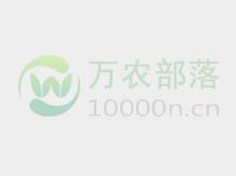 湖南省衡南县军诚新型果苗种植基地大量供应各类优质桔类果苗...